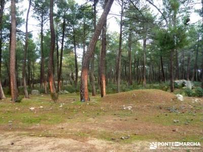 Pinares, Riscos y Atalayas; rutas madrid; rutas de trekking